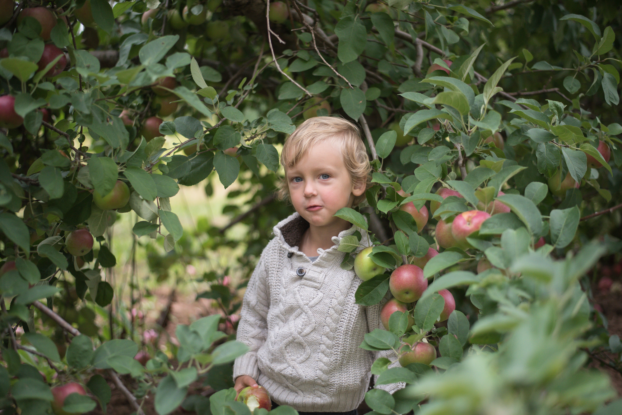 Wild Rosebuds Apple Picking in The Annapolis Valley with her family to celebrate Fall