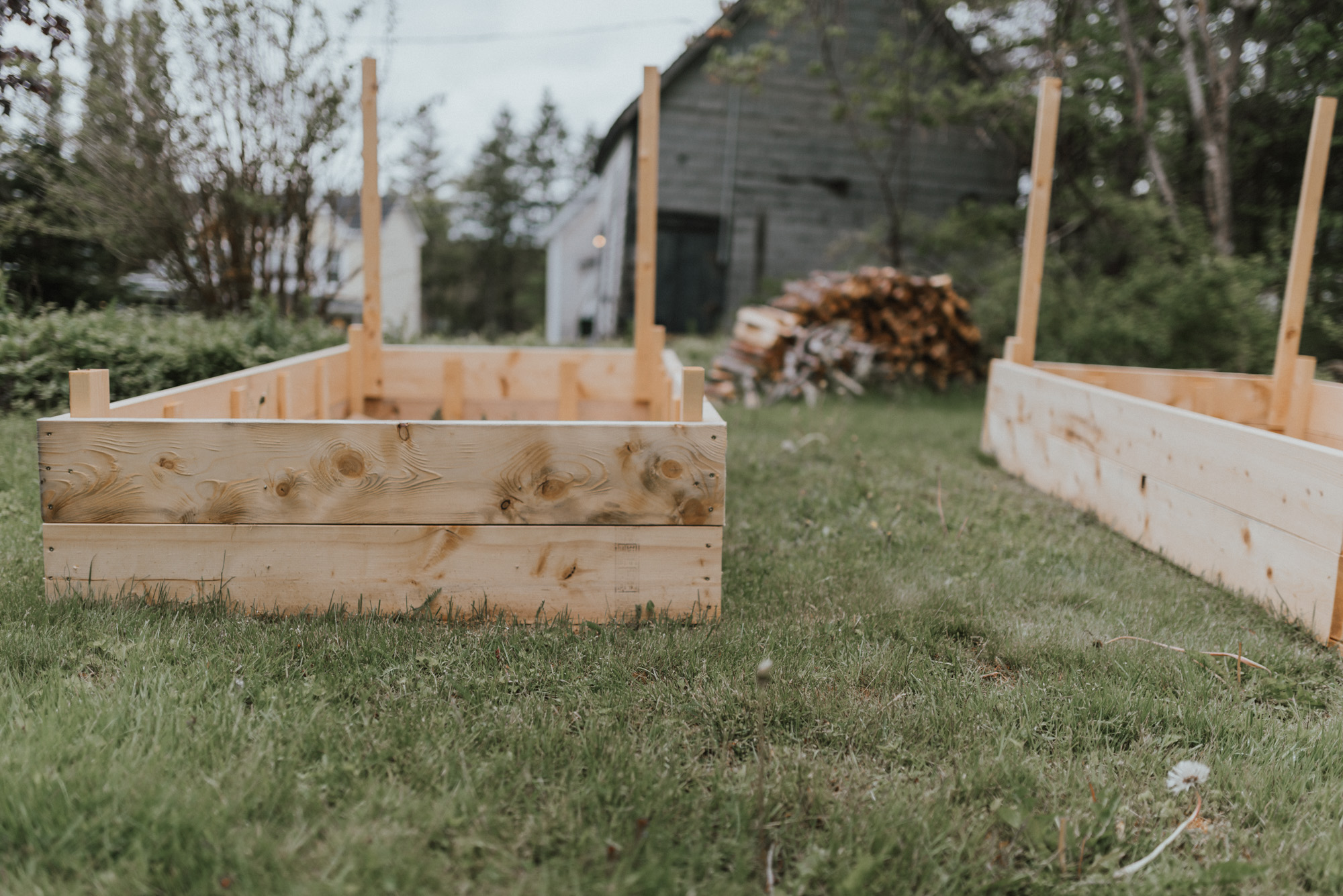 The Wild Decoelis | How To: Our Raised Vegetable Garden On a budget | spruce boards